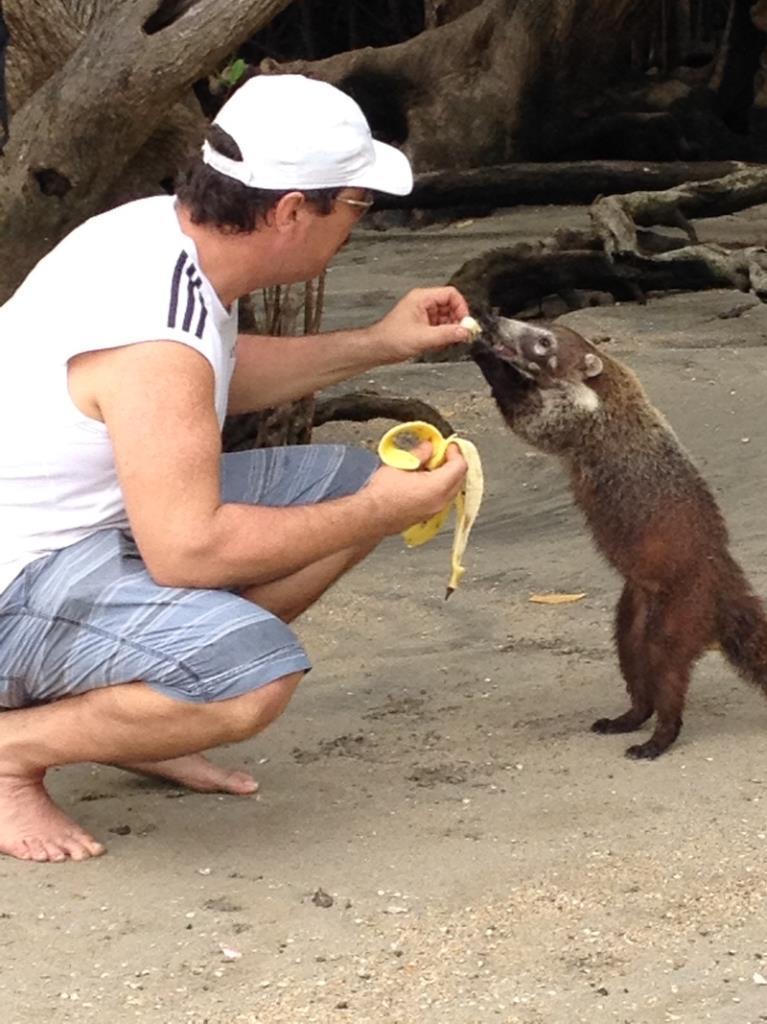 Joseph Emanuelli feeding a Coatimundi