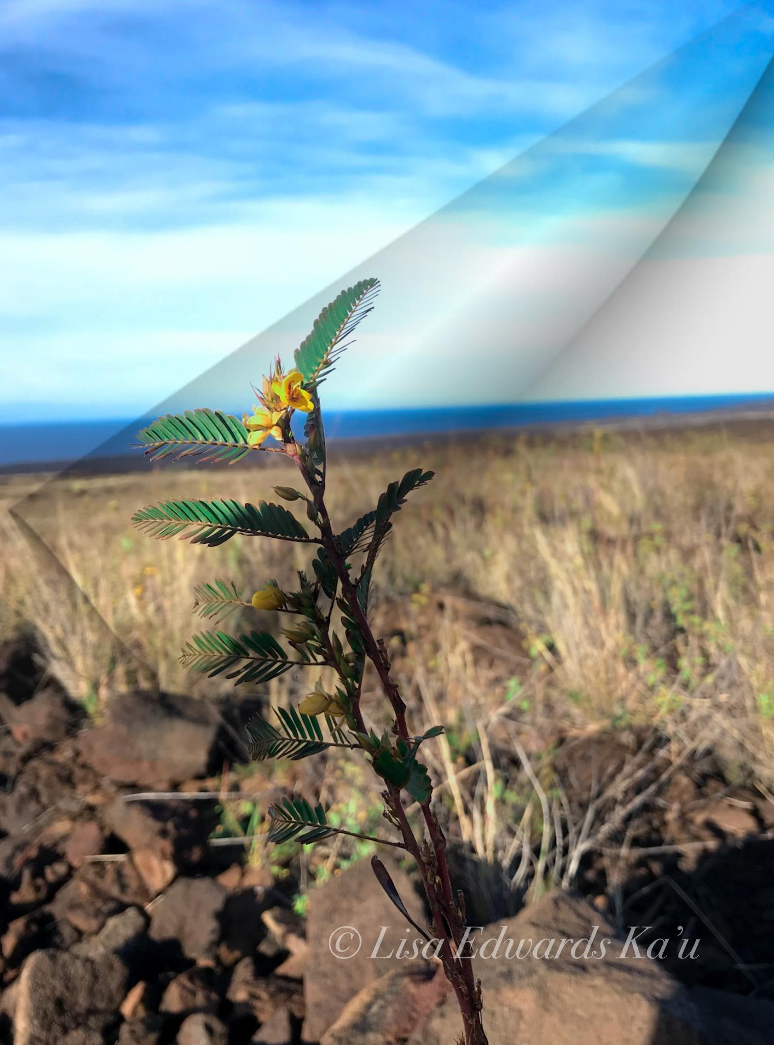 Bigisland_hawaii_landforsale