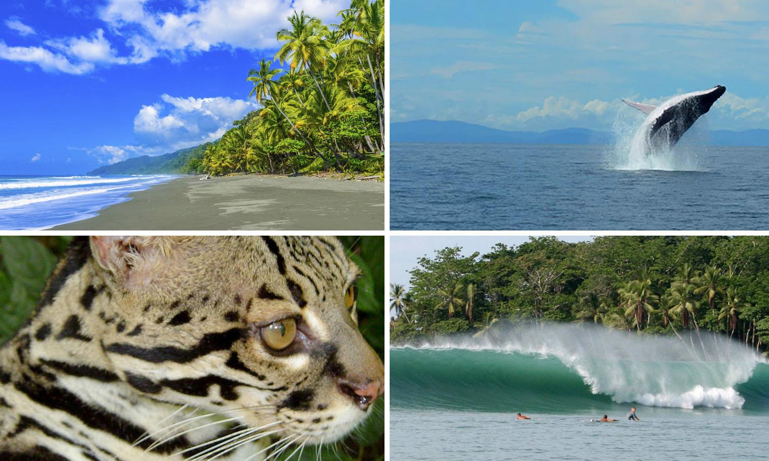 Things to do while living in Dominical Costa Rica