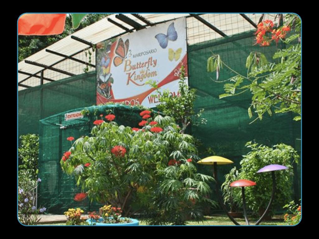 Butterfly Farm, Costa Rica