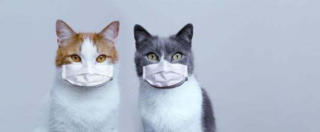 cats-wearing masks-COVID19