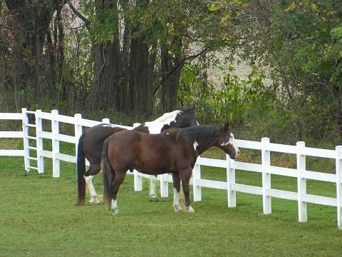Bushwood Maryland Horse Farm in Saint Mary's County is Located On a Gorgeous Waterfront, on White's Neck Creek, in Saint Mary's County, MD.  Listed by Marie Lally of O'Brien Realty of Southern Maryland!  Call Marie Lally at 301-748-8698 to schedule a private tour of this amazing farm!