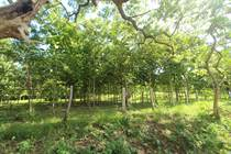 Farms and Acreages for Sale in Santa Rosa, Tamarindo, Guanacaste $1,600,000