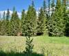 Lots and Land for Sale in Libby, Montana $82,000