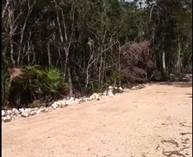 Lots and Land for Sale in Tulum, Quintana Roo $32,300