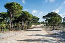 Farms and Acreages for Sale in Comporta, Grândola, Setubal €1,406,000