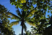 Lots and Land for Sale in Chemuyil, Quintana Roo $55,000