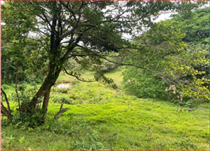 Commercial Real Estate for Sale in Arenal, Guanacaste $67,000