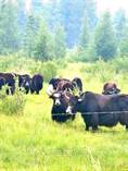 Farms and Acreages for Sale in Alberta, Rural Clearwater County, Alberta $335,000
