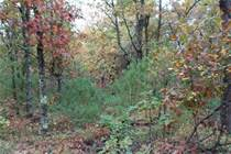 Lots and Land for Sale in Gordon, Wisconsin $165,000
