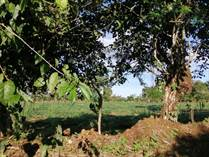 Farms and Acreages for Sale in Bugaba, Chiriquí  $70,000