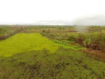 Farms and Acreages for Sale in San Pedro Colombia, Toledo $150,000
