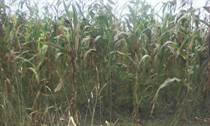 Lots and Land for Sale in Narok KES3,300,000