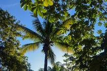 Lots and Land for Sale in Tulum, Quintana Roo $40,000