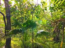Lots and Land for Sale in Ruta de los Cenotes, Puerto Morelos, Quintana Roo $15,800