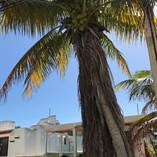 Homes for Sale in Chicxulub Puerto, Chicxulub, Yucatan $37,000