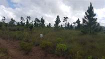 Lots and Land for Sale in Mountain Pine Ridge, Cayo $6,000