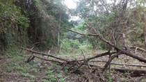 Lots and Land for Sale in Santa Teresa, Puntarenas $180,000