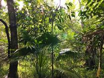 Lots and Land for Sale in Ruta de los Cenotes, Puerto Morelos, Quintana Roo $32,000