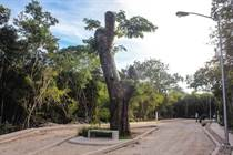 Lots and Land for Sale in Tulum, Quintana Roo $82,578