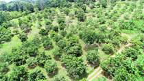 Lots and Land for Sale in Cortez, Chontales, Puntarenas $1,000,000