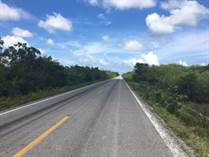 Lots and Land for Sale in Ruta de los Cenotes, Puerto Morelos, Quintana Roo $12