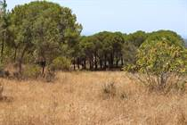 Farms and Acreages for Sale in Melides , Grândola, Setubal €600,000
