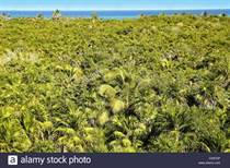 Lots and Land for Sale in Sian Ka'an, Sian Kaan, Quintana Roo $2,750,000