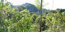 Lots and Land for Sale in Ojochal, Puntarenas $59,000