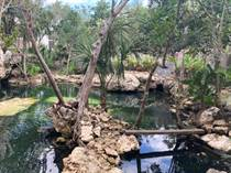 Homes for Rent/Lease in Bambu, Playa del Carmen, Quintana Roo $1,800 monthly