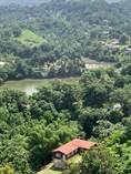 Farms and Acreages for Sale in Bo. Guadiana, Naranjito, Puerto Rico $1,100,000