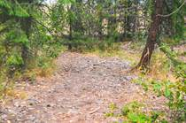 Lots and Land for Sale in Salmo, British Columbia $199,000