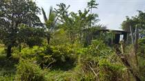 Lots and Land for Sale in Bo. Helechal, Barranquitas, Puerto Rico $60,000