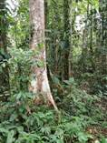 Lots and Land for Sale in Osa, Piedras Blancas, Puntarenas $63,000