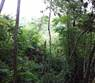 Lots and Land for Sale in Belmopan, Cayo $11,500