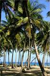 Lots and Land for Sale in Cabarete, Puerto Plata $340