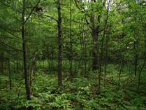 Lots and Land for Sale in Dickson Township, Michigan $29,900