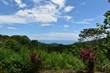 Lots and Land for Sale in Dominical, Puntarenas $729,000