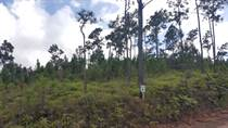 Lots and Land for Sale in Mountain Pine Ridge, Cayo $9,000
