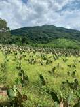 Farms and Acreages for Sale in Puerto Vallarta, Jalisco $699,000