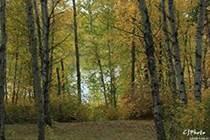 Lots and Land for Sale in Saskatchewan, Debden, Saskatchewan $34,900