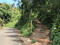 Farms and Acreages for Sale in Bo. Maricao Afuera, Maricao, Puerto Rico $125,000