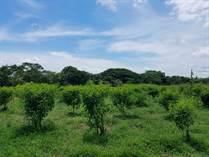 Farms and Acreages for Sale in Hacienda Vieja, Orotina, Alajuela $1,600,000