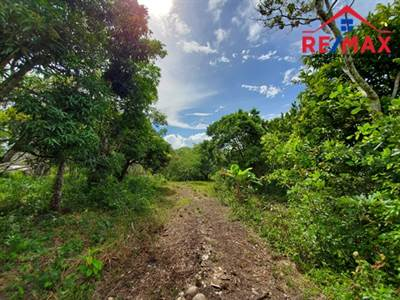 6 ACRE BELIZE FARM + BEARING FRUIT TREES