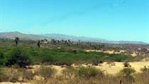 Lots and Land for Sale in Buena Vista, Baja California Sur $210,000