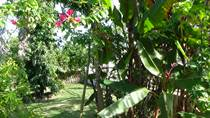 Homes for Rent/Lease in San Martin Area, Belmopan, Cayo $450 monthly
