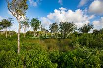 Lots and Land for Sale in Sarteneja, Corozal $15,000