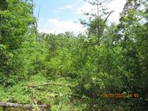 Lots and Land for Sale in Sunbright, Tennessee $136,500