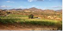 Recreational Land for Sale in Valle de Guadalupe, Ensenada, Baja California $3,500,000