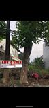 Homes for Sale in Marikina City, Metro Manila ₱16,000,000